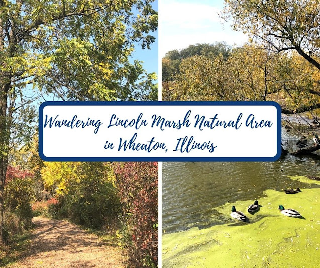 Lincoln Marsh Natural Area: A Habitat Restoration Success Story in Wheaton, Illinois