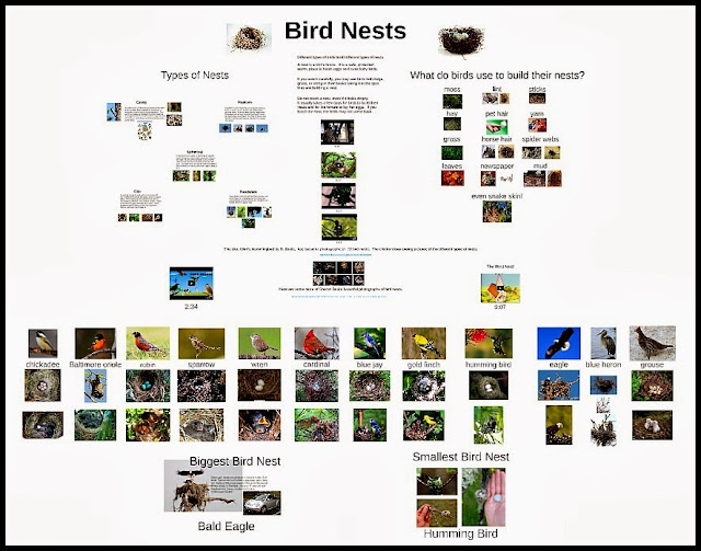 http://www.teacherspayteachers.com/Product/Bird-Nest-Prezi-1172522