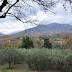 """Castel di Sasso, ultimi preparativi per l'evento """"Caccia all'Olio 2018"""""""