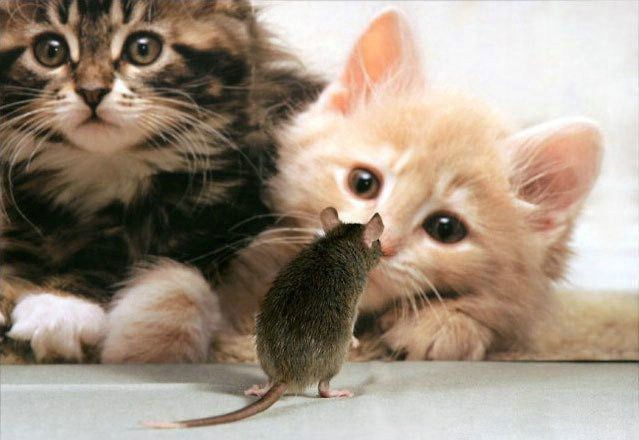 Funny Cute Cats And Puppies Cute Cats And Kittens