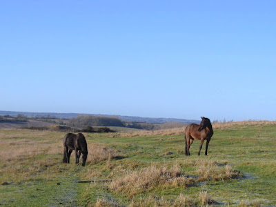 Two horses in a field with blue sky