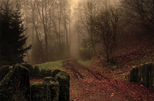 30 Attractive Foggy Pictures for your Inspiration