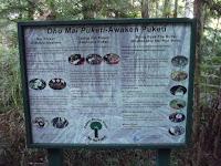 Puketi Forest preserves Kauri trees - North Island, New Zealand