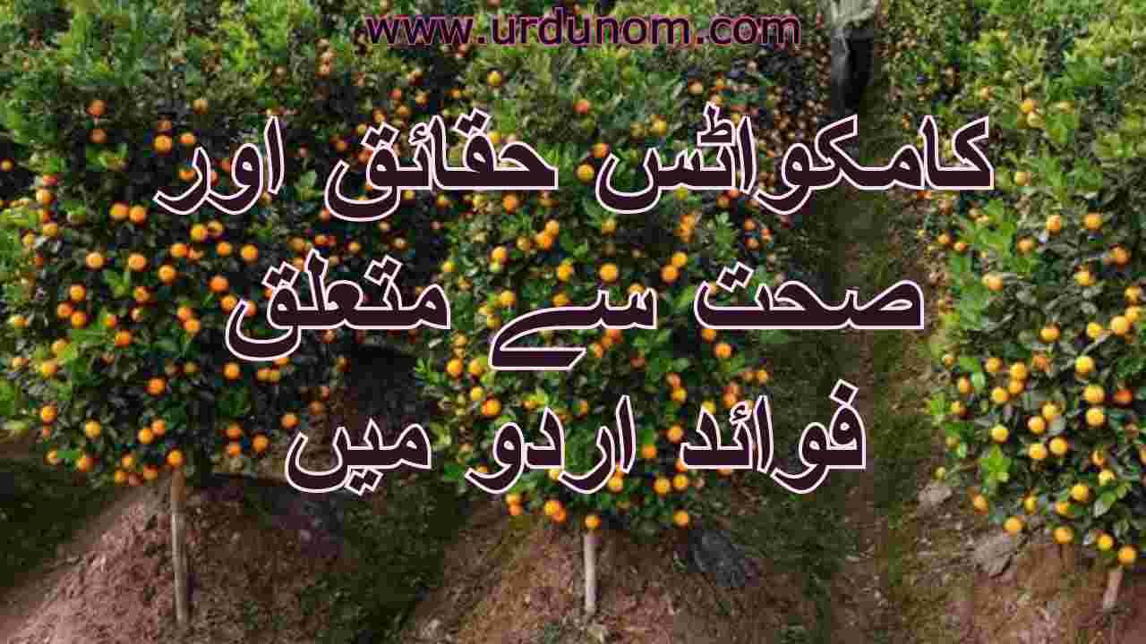 Kumquats Health Benefits in Urdu