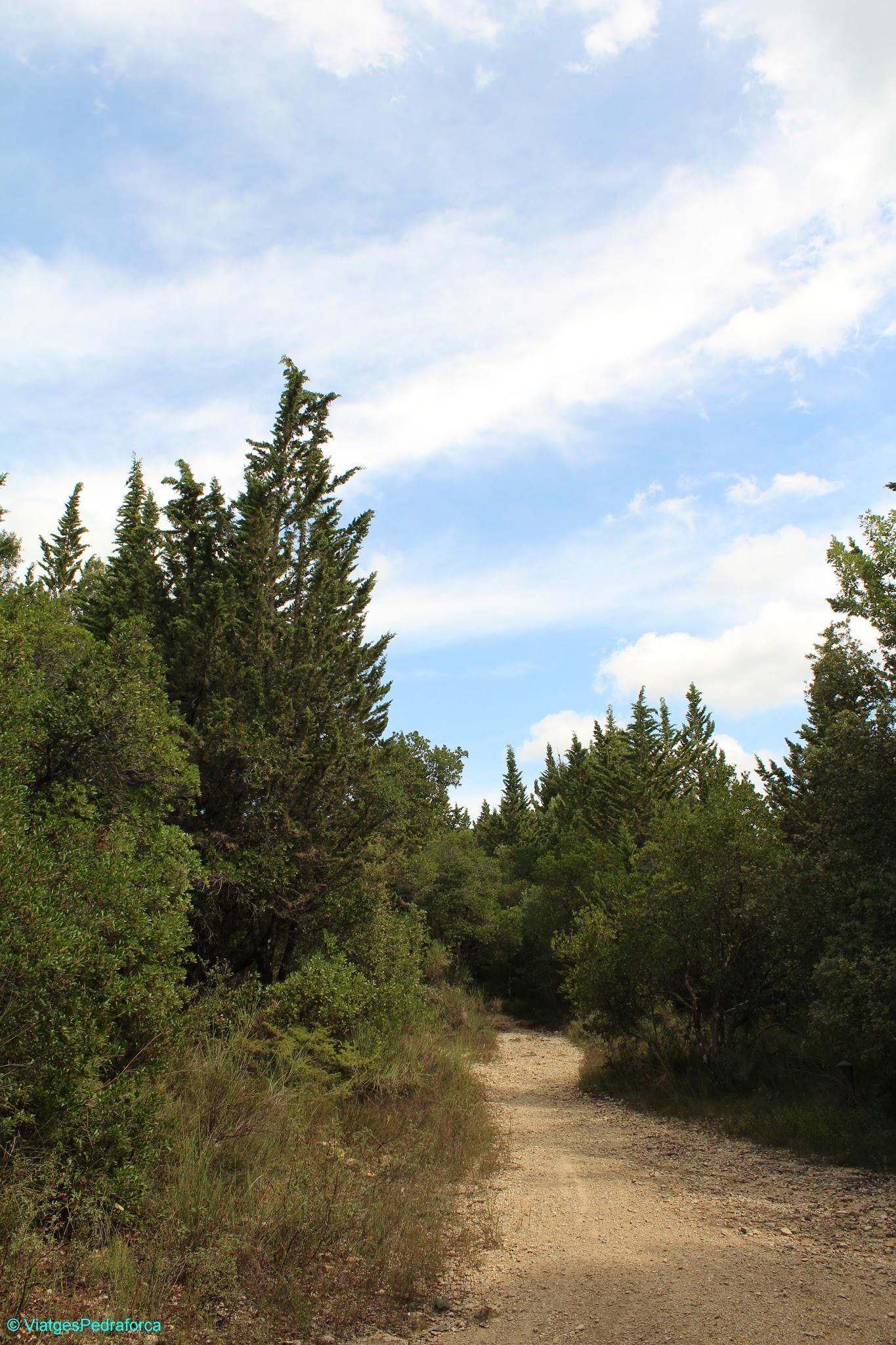 Riserva naturale Bosco di Sant'Agnese, Chianti, Toscana, Itàlia