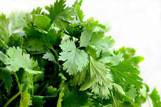 Cilantro Irony: 13 Health Benefits and Risks