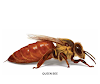 Types Of Bees & Their role In The Colony