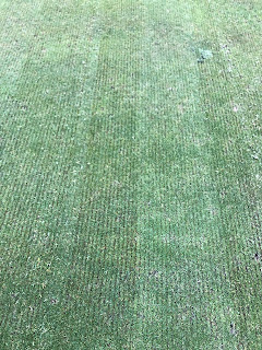 golf green groomed