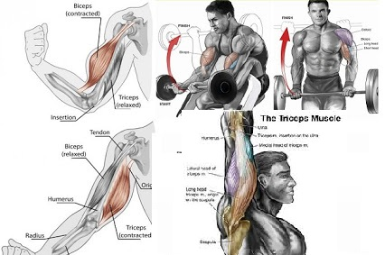 Muscle Building Arm Workout