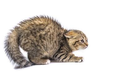 Frightened cat, via Adobe Stock