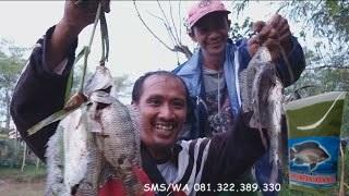 Pelet Serbuk Umpan Ikan Nila