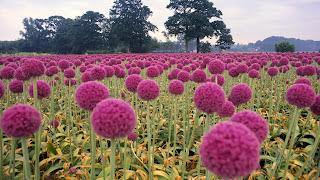 Herbal panacea image