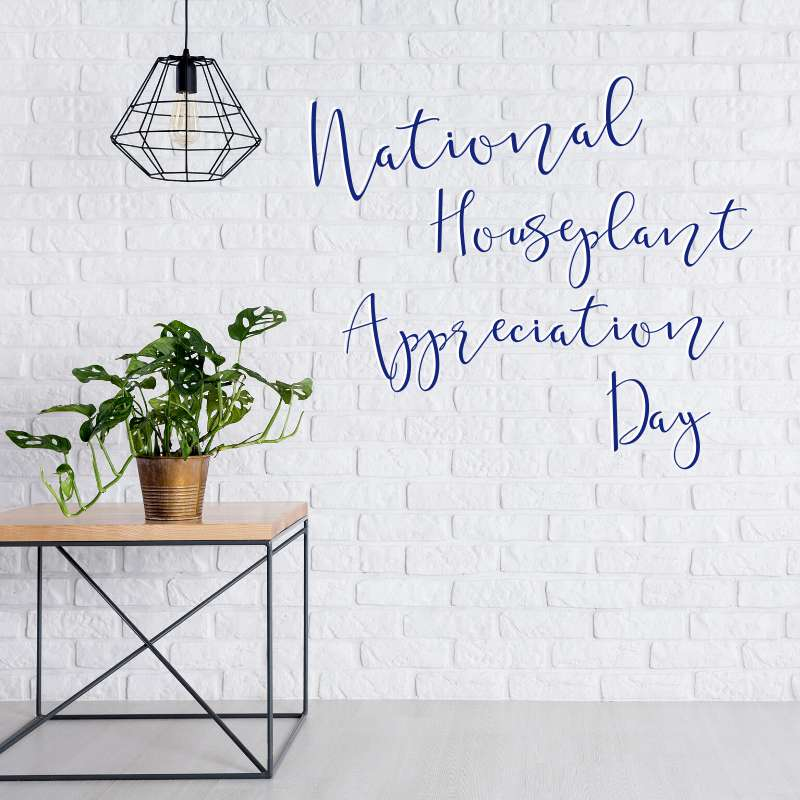 National Houseplant Appreciation Day Wishes For Facebook