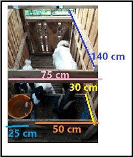Kandang Kambing Domba  Kandang individu induk dg 1-2 ekor anak + tempat pakan-minum