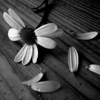 Del amor y sus decepciones, un fragmento de Elogio de la decepción, Francisco Acuyo