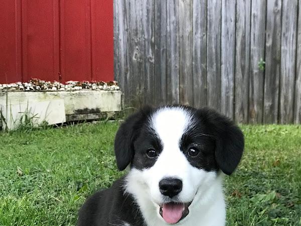 Meet Miss Hazel!