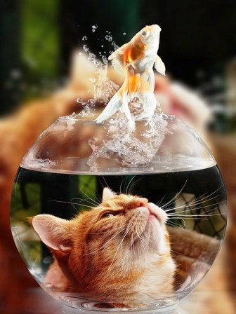 kucing ikan