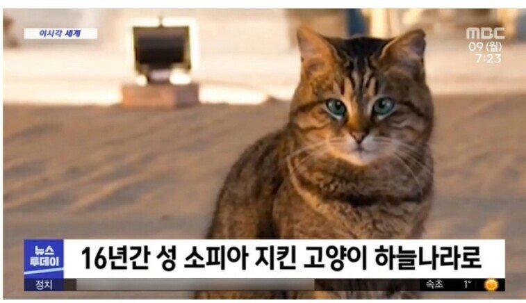 16년간 성 소피아 지킨 고양이