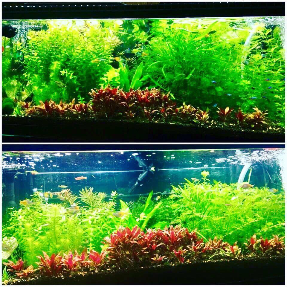 Aap tmc grobeam 600 led aquarium light high lighting for Aquarium versand