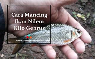 Essen Katilayu Ikan Nilem Khusus Kilo Gebrus
