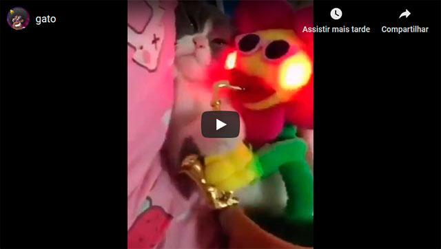 https://www.ahnegao.com.br/2019/04/o-gato-que-certamente-adorou-o-brinquedo-novo.html