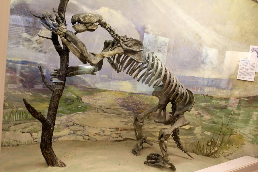 the ice age extinction of the megafauna A popular idea suggests that the impact of a comet 10,000 years ago caused a mass extinction, killing off the pleistocene megafauna convincing scientific evidence is still lacking.