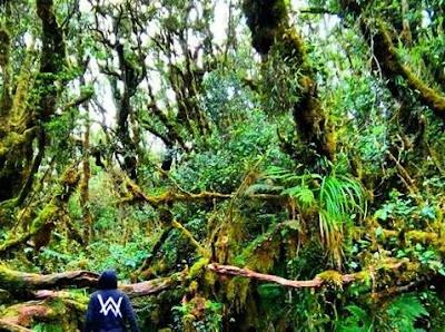 Hutan Lumut Gunung Singgalang
