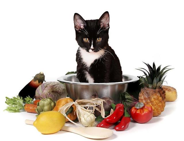 Tự Chế Biến Thức Ăn Cho Mèo