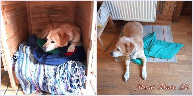 Nähen für den Hund - Sewing for the Dog