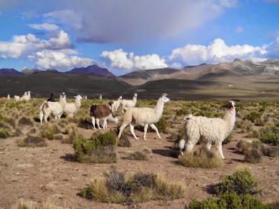 Aus den Bergen im Süden Boliviens wünsche ich Euch einen gesegneten Sonntag