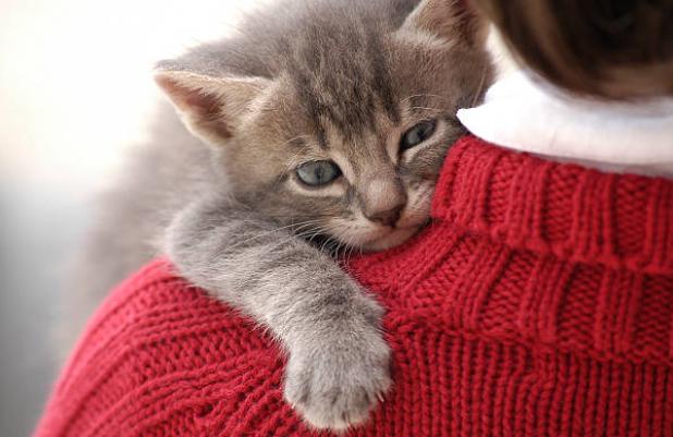 gato-pode-causar-asma-?