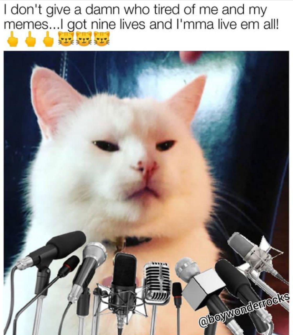 Our Memes Of The Week 46 Smudge The Cat Edition The Return
