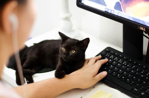 Jak spędzać czas z kotem w czasie pandemii?