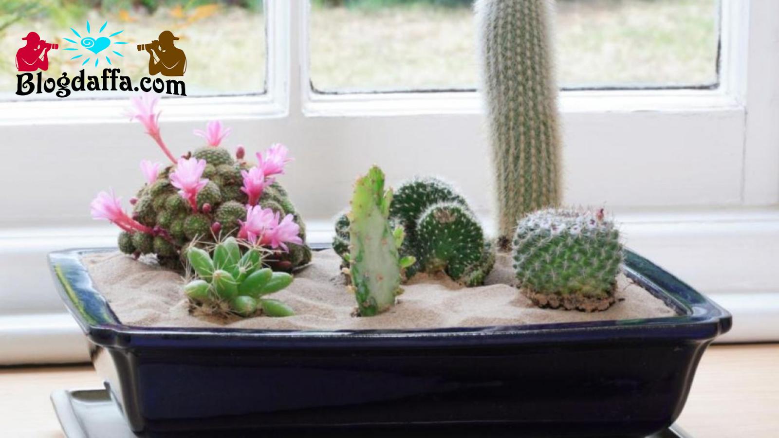 Fungsi tanaman hias kaktus