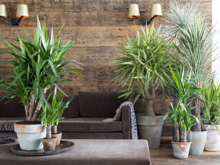 5 plantas de interior que requieren poca luz amigos de - Plantas de interior sin luz ...