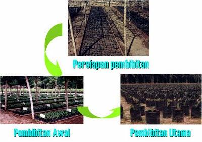Tips Memilih Areal Untuk Pembibitan Kelapa Sawit