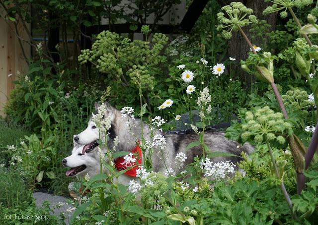 chelsea flower show zdjęcia z wycieczki