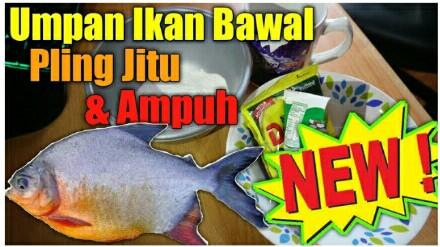 Resep Para Juara 20 Kumpulan Umpan Ikan Bawal Paling Jitu Jejaksemut