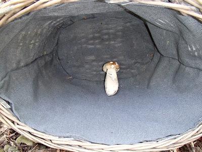 borowik szlachetny Boletus edulis