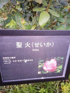 バラ(聖火)