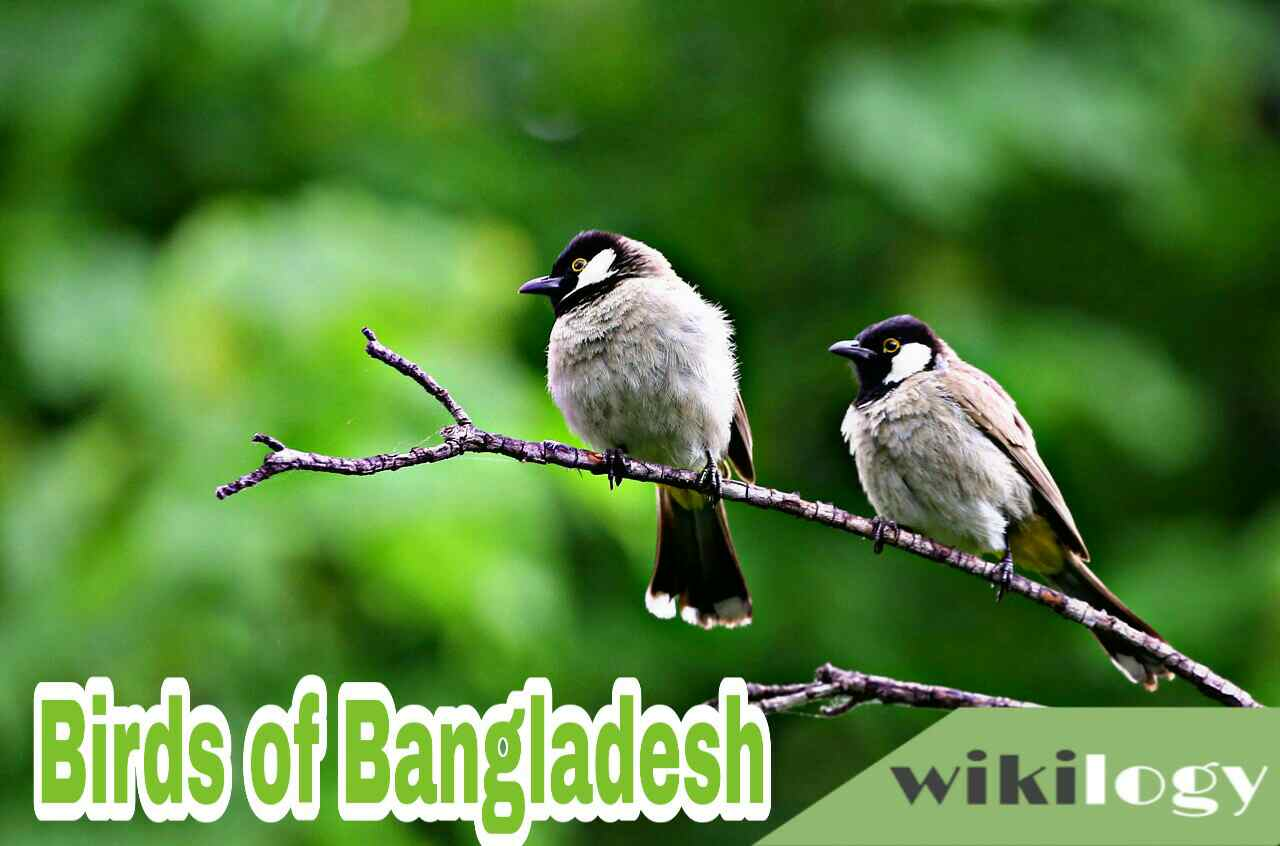 Birds of Bangladesh Paragraph Composition & Essay