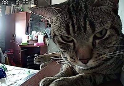 kucing eksis