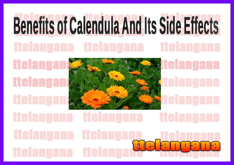 Benefits of Calendula And Its Side Effects