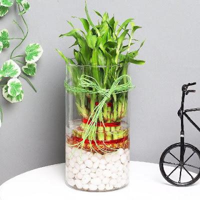 bambu dekoratif