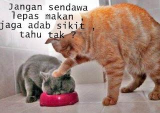 Gambar kucing kelakar sendawa