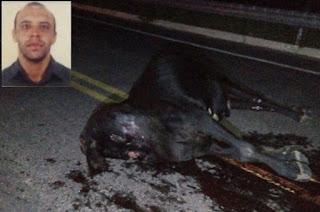 http://vnoticia.com.br/noticia/2156-motociclista-morre-ao-atropelar-vaca-em-presidente-kennedy