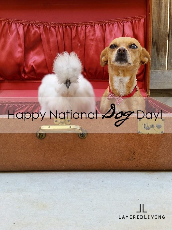 National-dog-Day-2014-Silkies-chicken-Vintage-Suitcase
