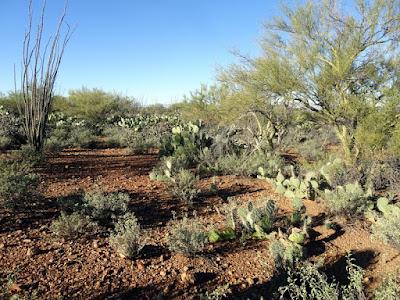 Tucson Mt Park