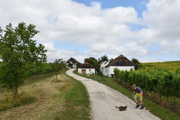 Kellerkatze in Hart-Aschendorf