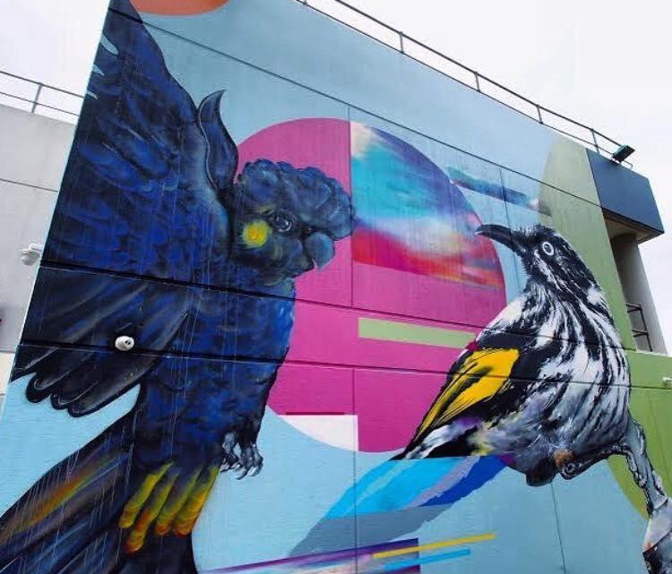 Kiwi S Angels Art Of Tayla Carlaw Parrot Graffiti